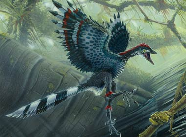File:Archaeopteryx1.jpg
