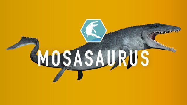 File:Mosasaurus.jpg