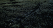 Long-Grass1