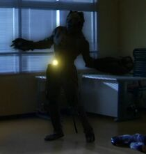Canis Minor Zodiarts