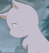 Neko in the rain