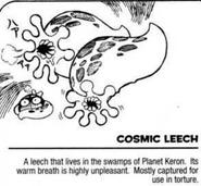 Space leach info