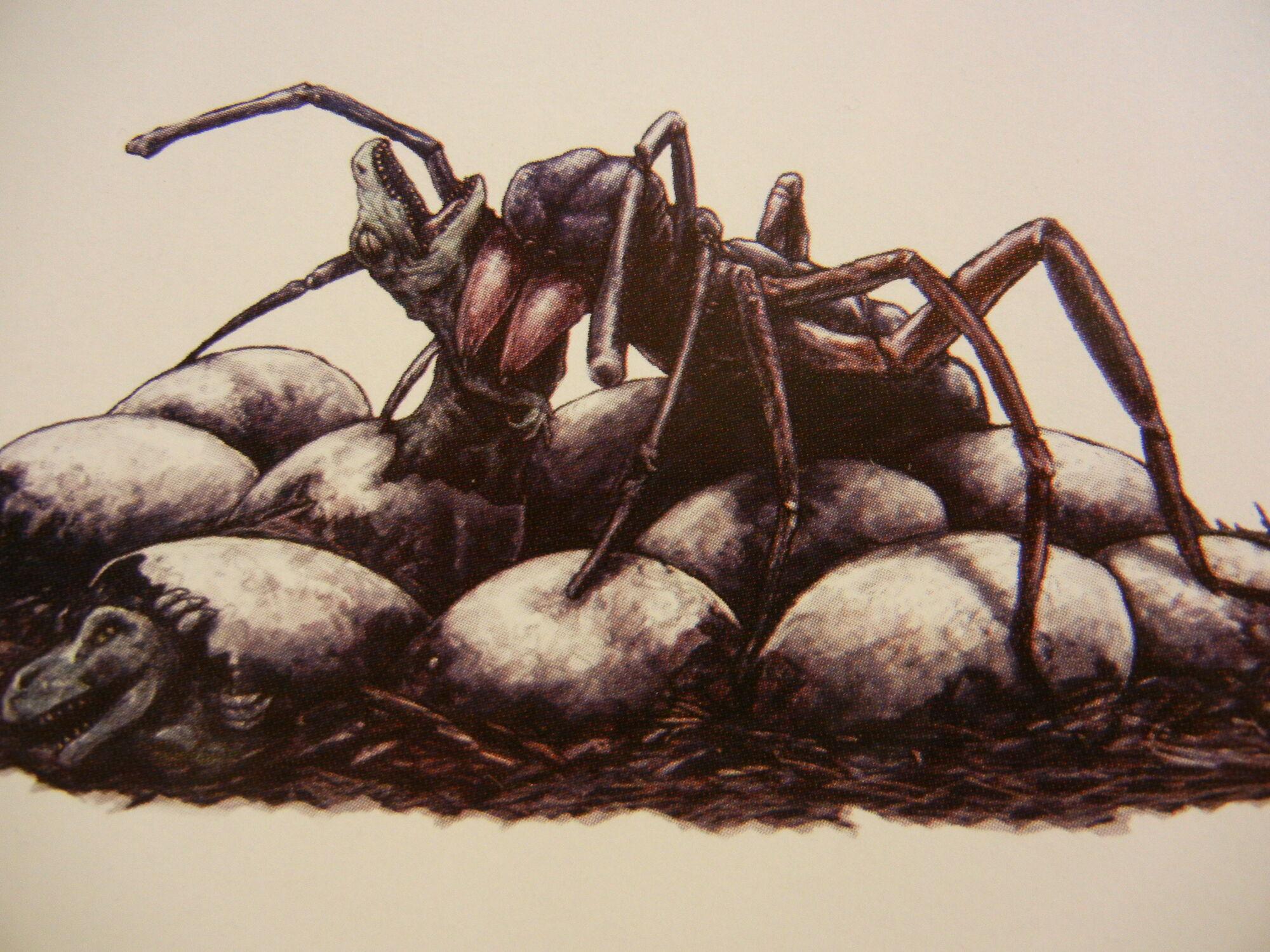 Category:Invertebrate | King Kong Wiki | FANDOM powered by ...