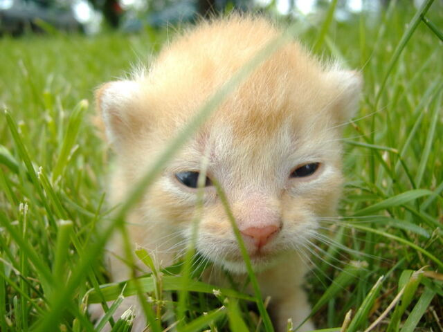 File:youngkitten.jpg
