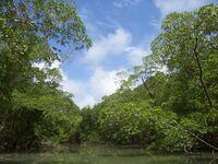 River in the Amazon rainforest.jpg