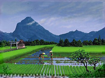 File:Rice Paddy.jpg