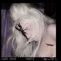 VENUS - Cover 001