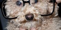 Fozzi (dog)
