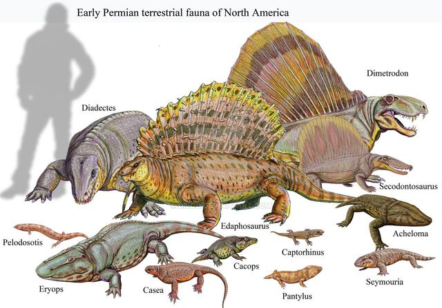 File:Classical Early Permian Terrestrial Faunal Assemblage from North America.jpg
