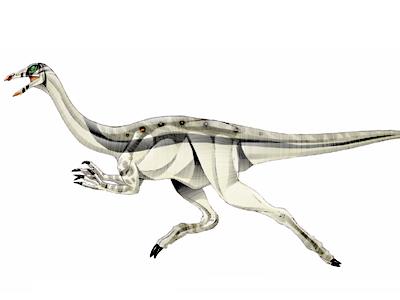 File:Archaeornithomimus.jpg