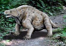 Pareiasaurus