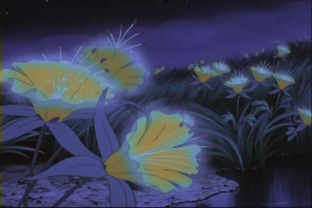 File:Night Flowers.jpg