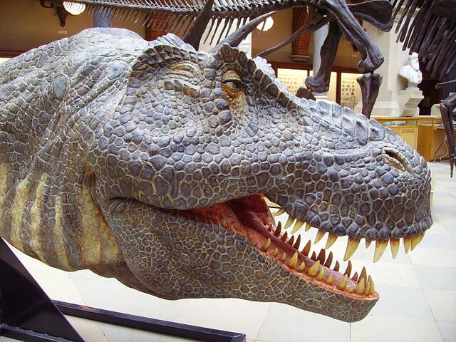 File:Realistic T.rex model.jpg