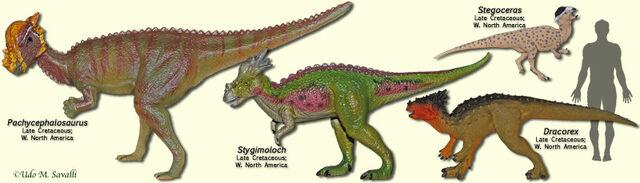 File:PachycephalosaurModels.jpg