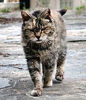 Feral Farm Cat