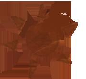 File:Gnar lore 2.png