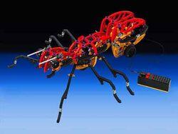 3582-Ant