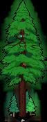 Plus gros séquoia du monde.png