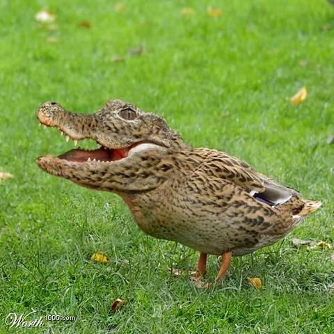 File:Crocoduck.jpg