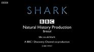 BBC Shark End Board 2015