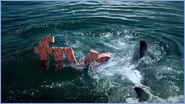 FiveSwimoff2004