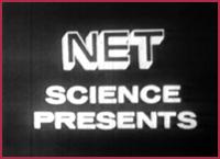 Video net