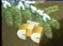 STS NY 5