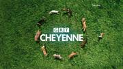 GRT Cheyenne dogs ident