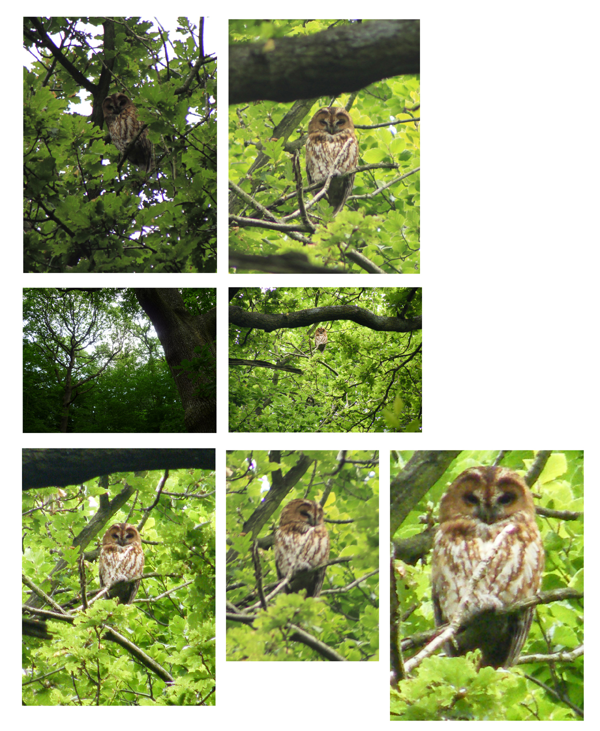 Owl pics june18th 2010