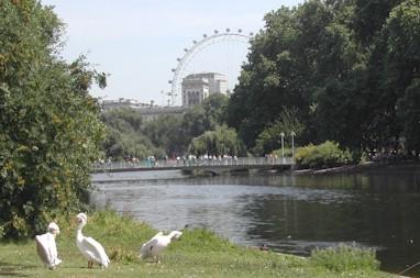 St James's Park view