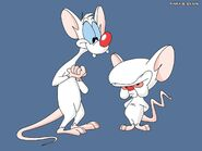 Pinky & The Brain Wallpaper