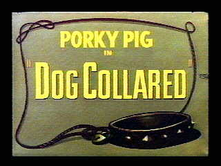 File:Dog Collared.jpg