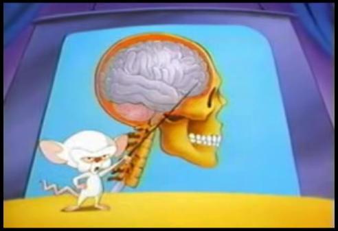 File:Brainstem.jpg