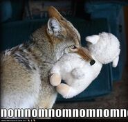 Coyote meme