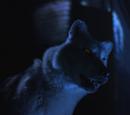 Wolf-Shifter