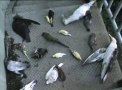 Archivo:Birdsportal.jpg