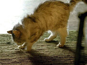 3x11-nadia-cat-rug.jpg