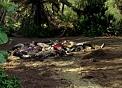 Ajira corpses