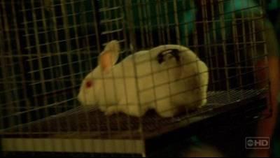 Archivo:Bunny.jpg