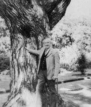 Jrrt 1972 tree