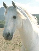 File:HorseThumb.png
