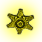 File:Small golden gear.png