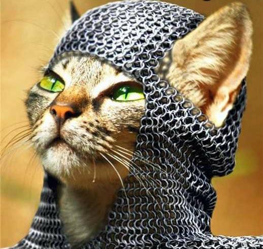 Lolcat knight