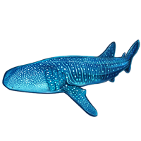 Huge item whaleshark 01