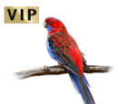Aussi Parrot