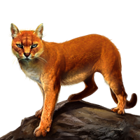 Huge item africangoldencat 01