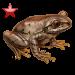 Item natalforestfrog ruby 01
