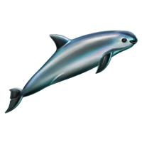 Huge item vaquita 01