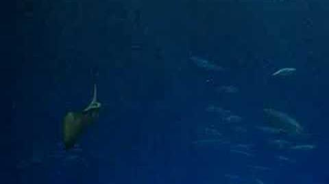Monterey Bay Aquarium Shark Tank