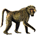 Item chacmababoon 01